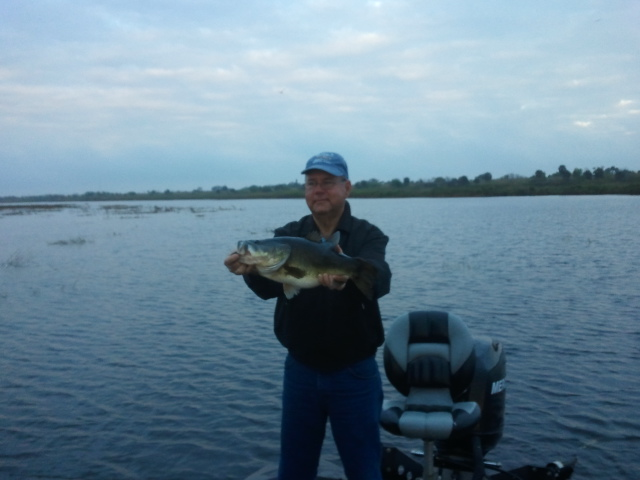 12 lb largemouth on lake okeechobee lake okeechobee bass for Lake okeechobee fishing guides